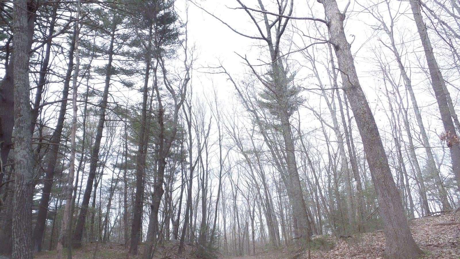 Into the Ominous Woods